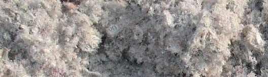 La ouate de cellulose
